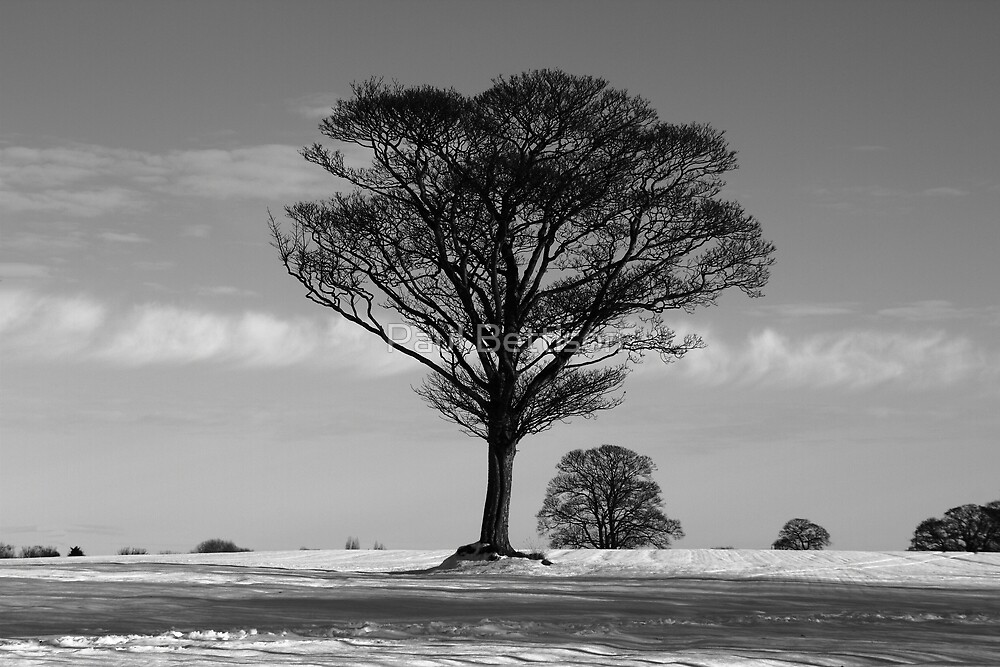 Alone at Winter Time by Paul Bettison