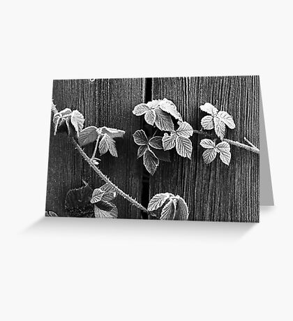 Frost & Thorns Greeting Card