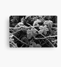 Frost & Thorns #2 Canvas Print
