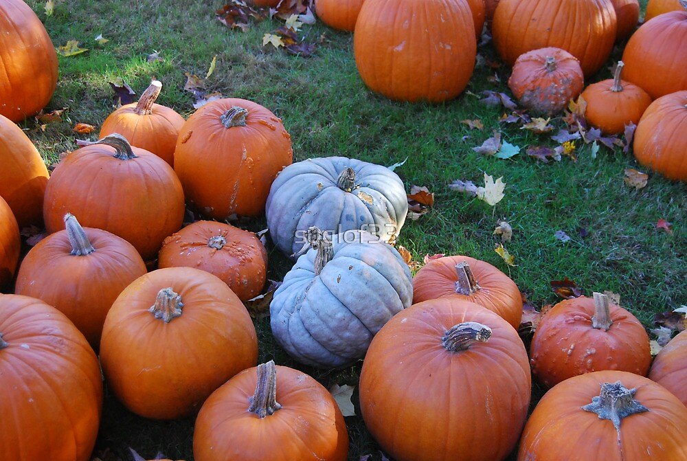Pumpkins in Autumn by suglof33
