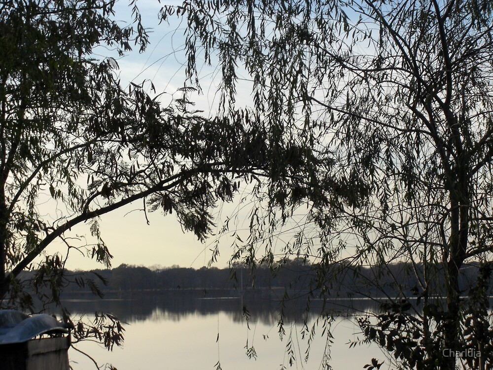 Water and Tree Series #5 by Charldia