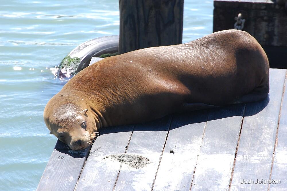 SF Seal by Josh Johnston