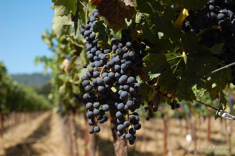 Grapes at Napa Vineyard by Josh Johnston