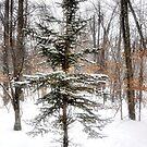 A Charlie Brown Christmas Tree by Debra Fedchin