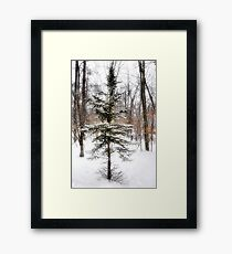 A Charlie Brown Christmas Tree Framed Print