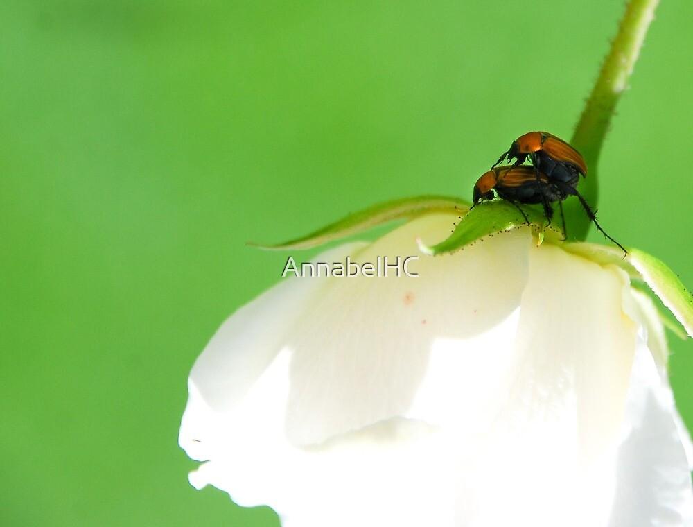 Bug Love by AnnabelHC