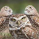 """The Eyes Have It"" - burrowing owls by ArtThatSmiles"