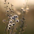 """""""Sundown Beauties"""" by chloemay"""
