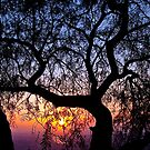 Sunrise through a tree by Andrew (ark photograhy art)