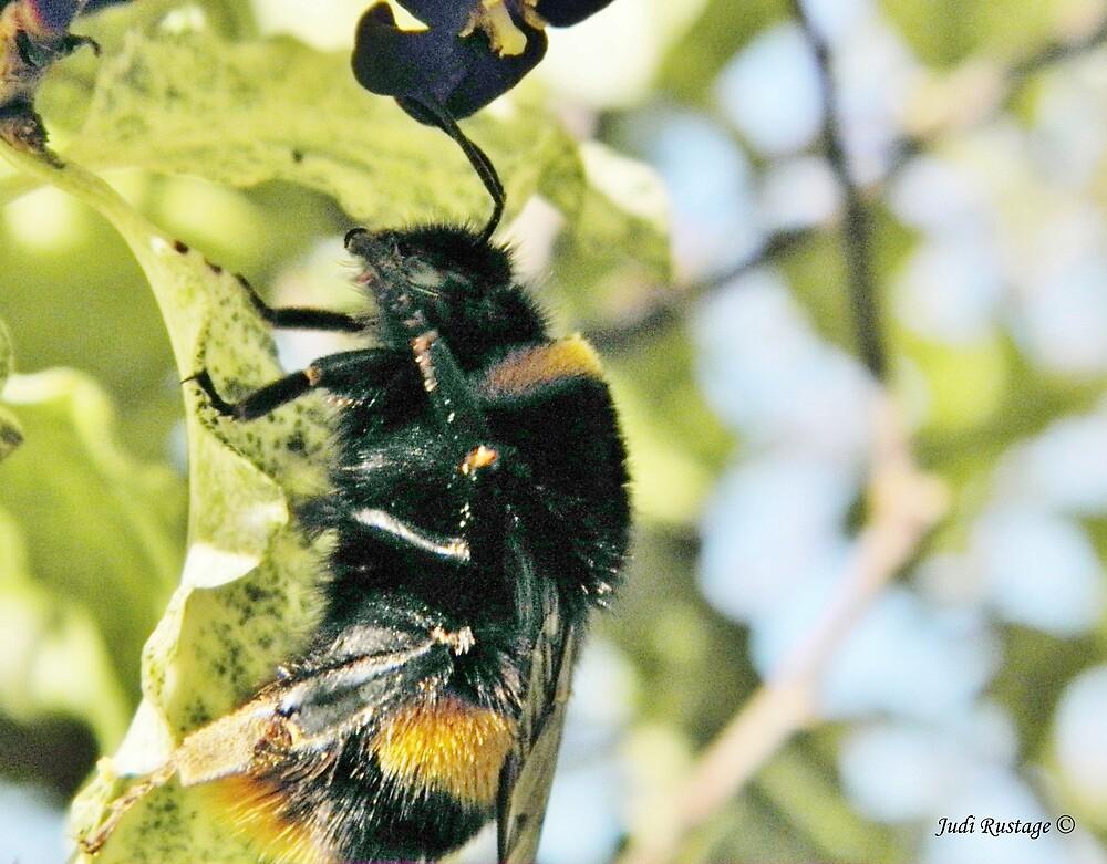 Honey maker by Judi Rustage