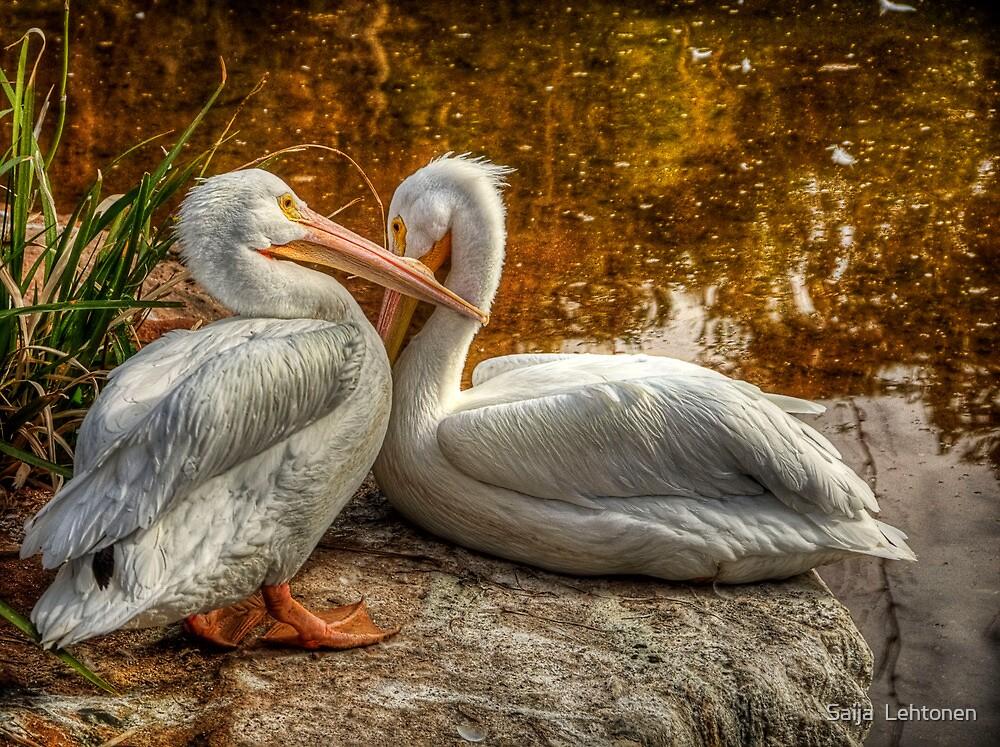 Pelican Bay  by Saija  Lehtonen
