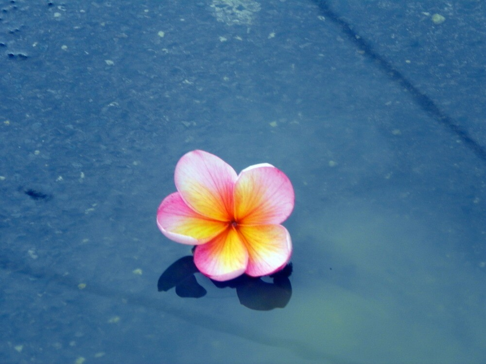 the floating flower :) by emilymargeret