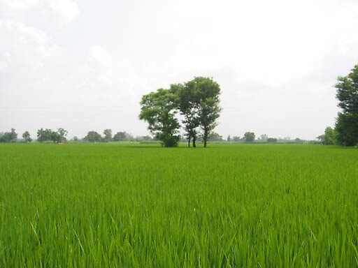 My Village (Bhagowal, Sialkot) by Naveed Sarwar
