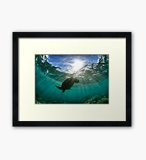 Dramatic turtle silhouette HDR Framed Print