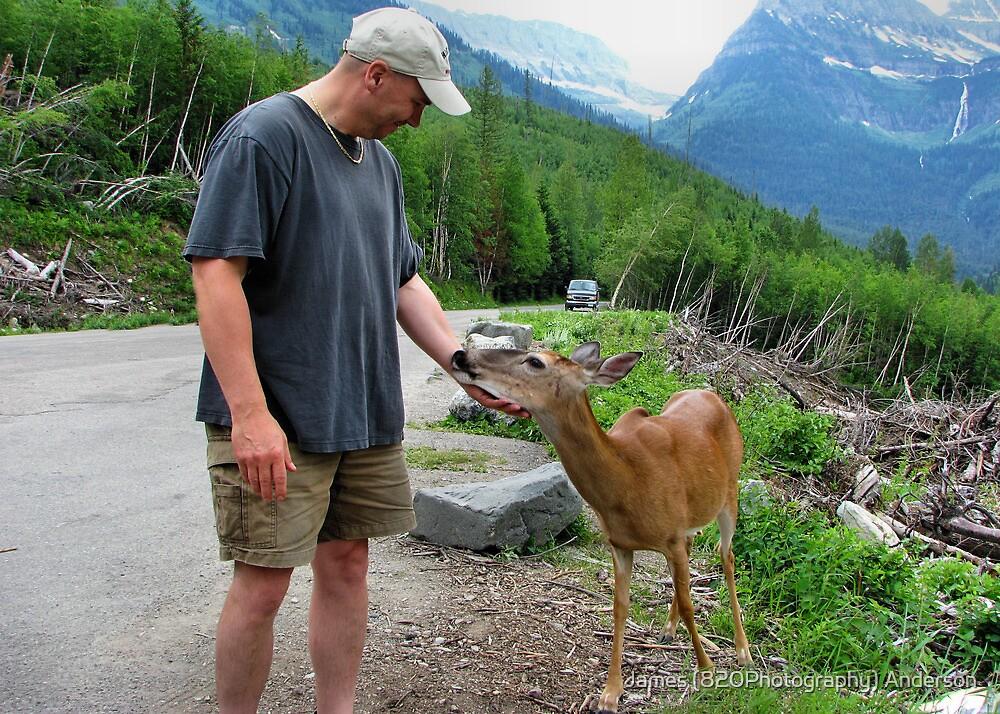 Friendly Deer by James Anderson