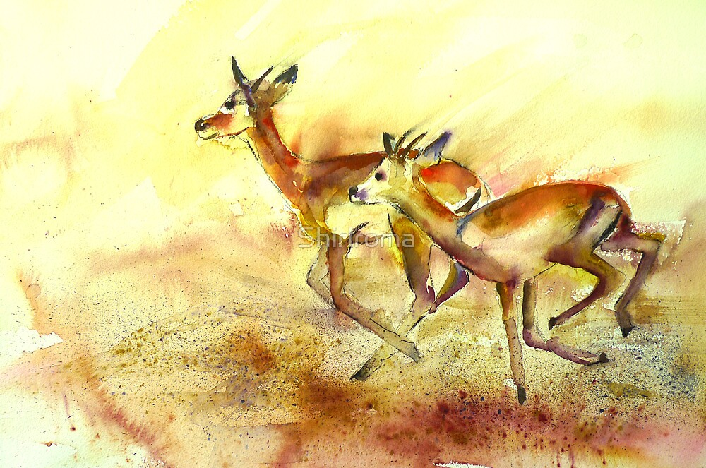 Impala on the run.  by Shirlroma