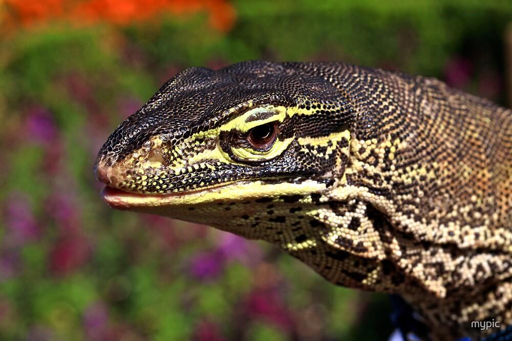 Lizard days- by mypic