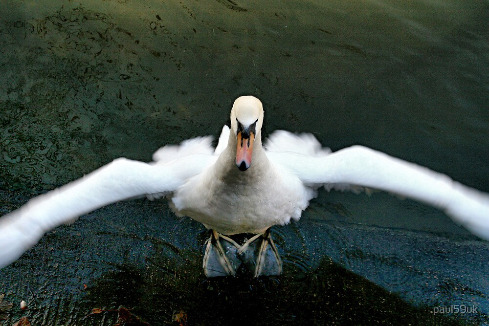 Swan unwinding by paul59uk