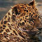 Jaguar at Rest by AnnDixon