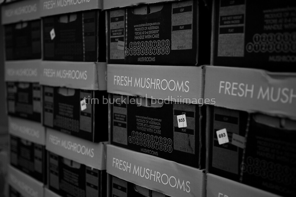 shrooms. queen vic market, melbourne by tim buckley | bodhiimages