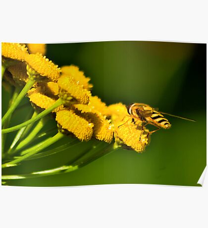 Seeking the Nectar Poster