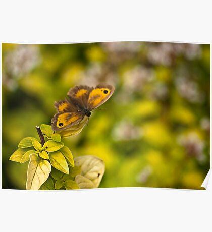 Gatekeeper Butterfly #2 Poster