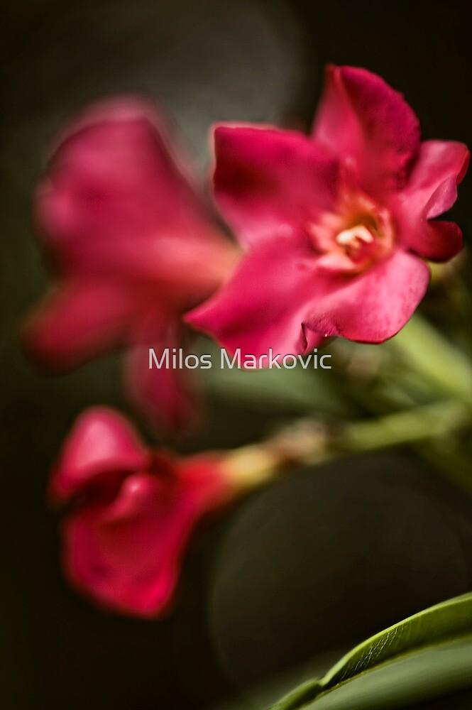Softness by Milos Markovic