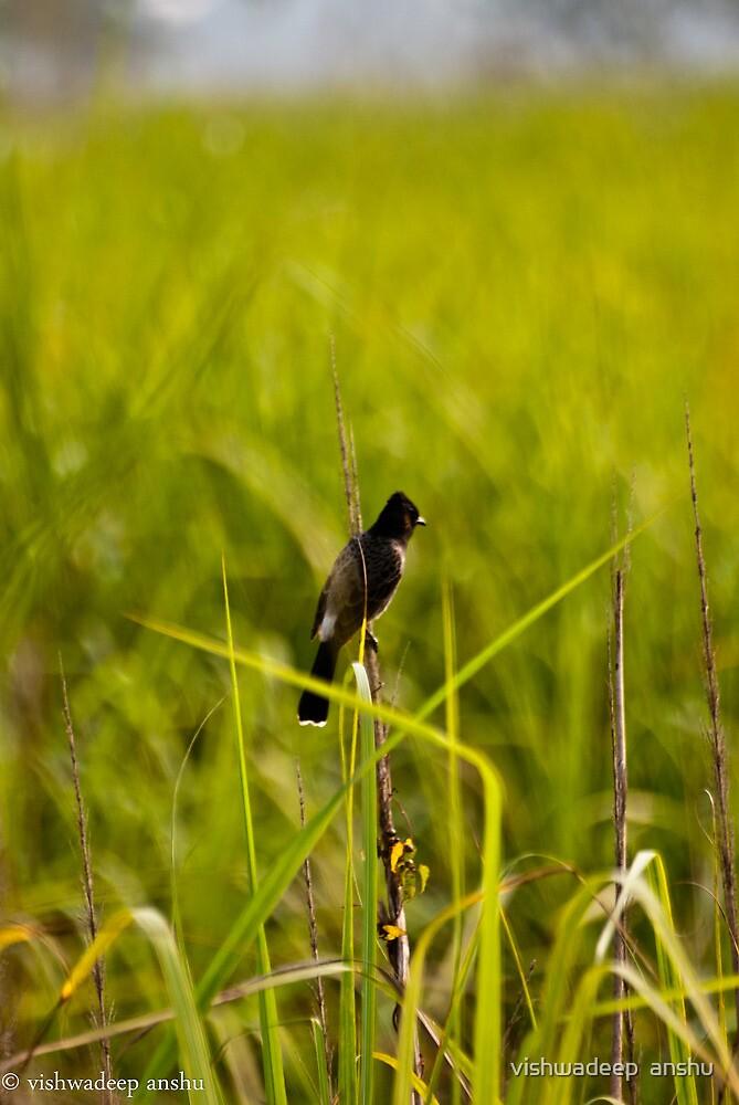singing its way by vishwadeep  anshu