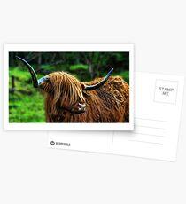 Highland Coo. Postcards