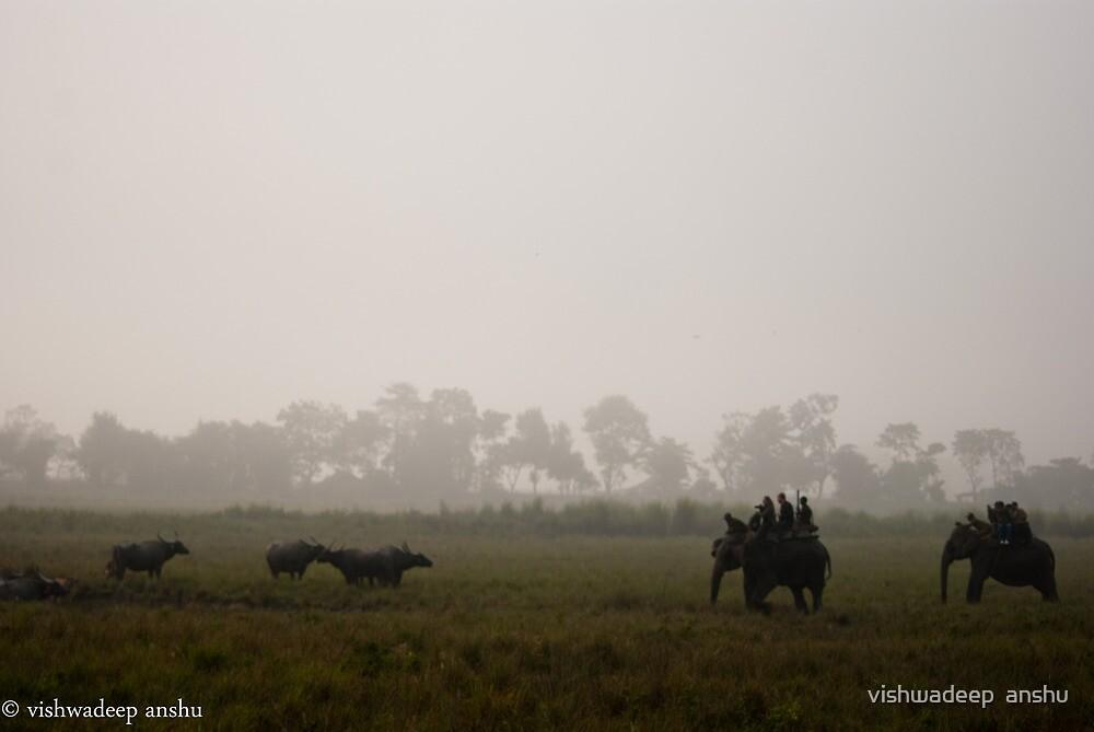 apporaching the buffalo group by vishwadeep  anshu