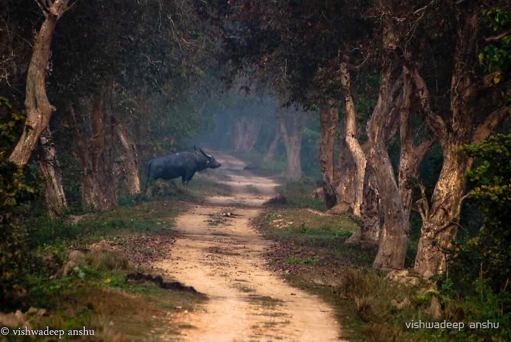 wild buffalo waiting to cross by vishwadeep  anshu