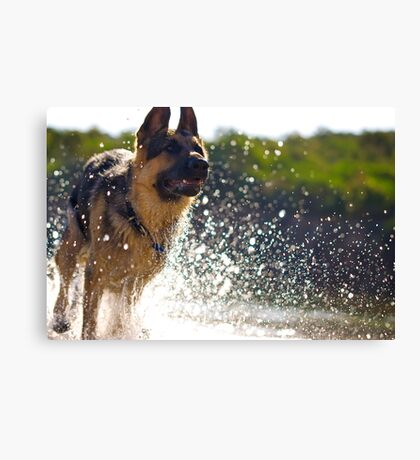 Splish Splash Canvas Print