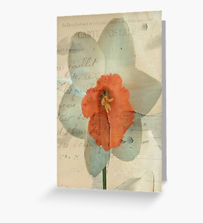 Narcissus ©  Greeting Card