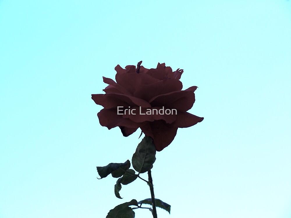 Red Rose by Eric Landon