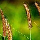 Less is more: grass by Kornrawiee