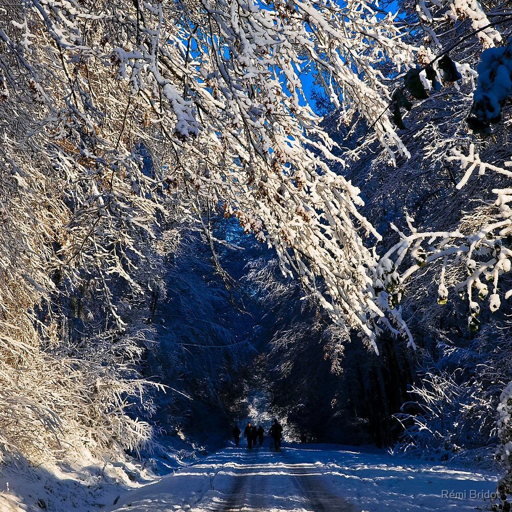 Montmorency Forest in snow  by Rémi Bridot