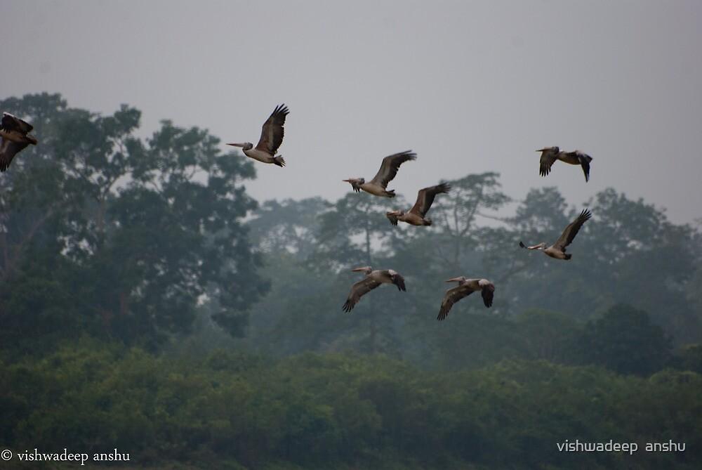 flight of feathers by vishwadeep  anshu