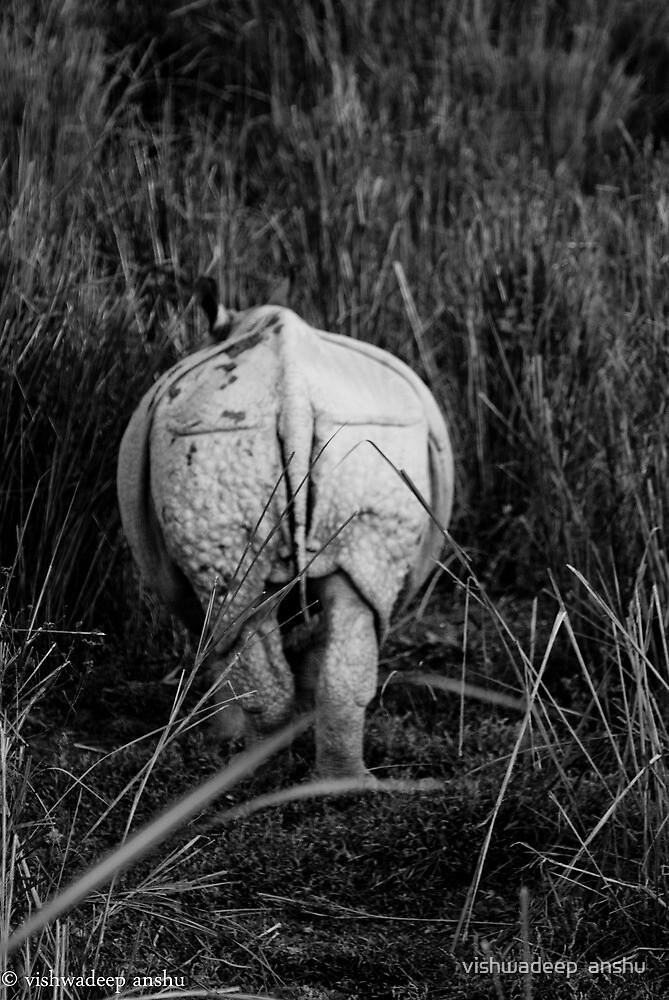the rhino by vishwadeep  anshu