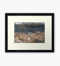 Goldenrod at Narragansett Beach Framed Print