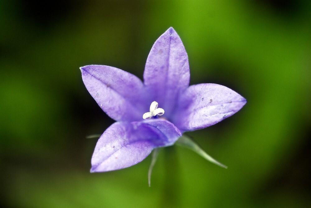 Bloom by Kristen Wood