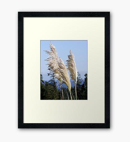 Delicate Framed Print