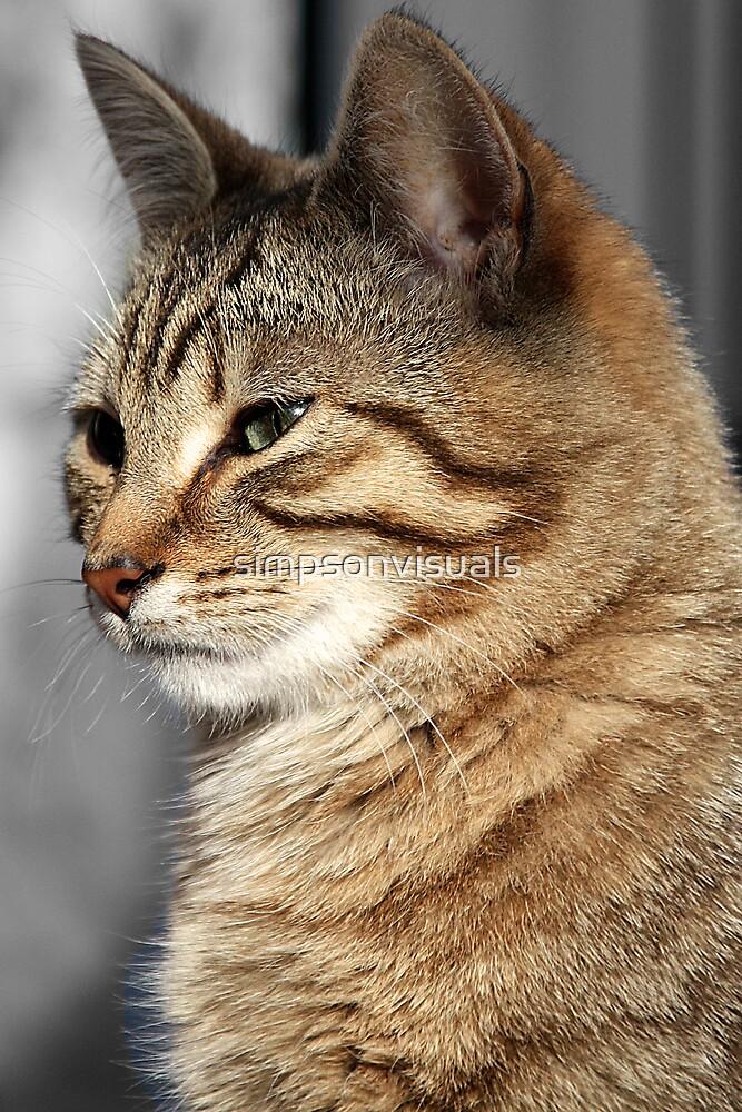 Tom Cat by simpsonvisuals