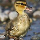 DisGo Duck by DigitallyStill