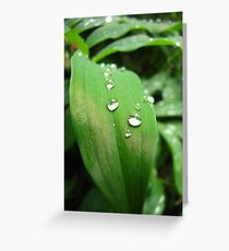 Dewdrops - Southern Oregon Greeting Card
