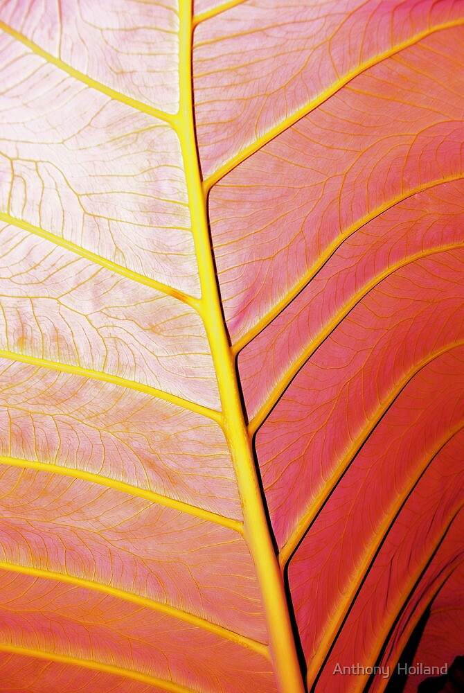 Red Leaf by Anthony  Hoiland