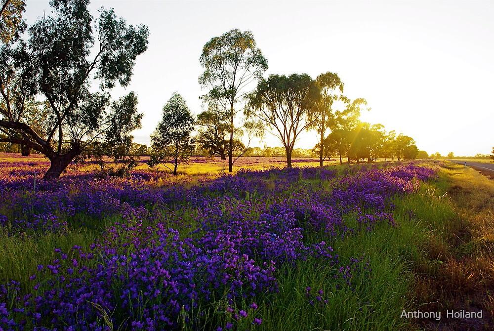 Wagga Sunrise  by Anthony  Hoiland