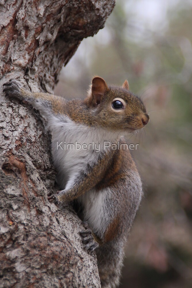 Mr. Squirrel by Kimberly Palmer