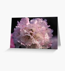 Rhododendron at Cloudehill Greeting Card