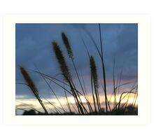 Grassy sunset Art Print