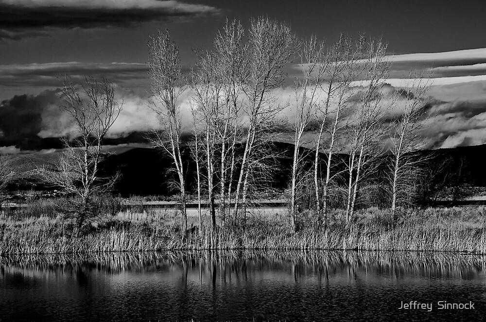 Winter Trees by Jeffrey  Sinnock